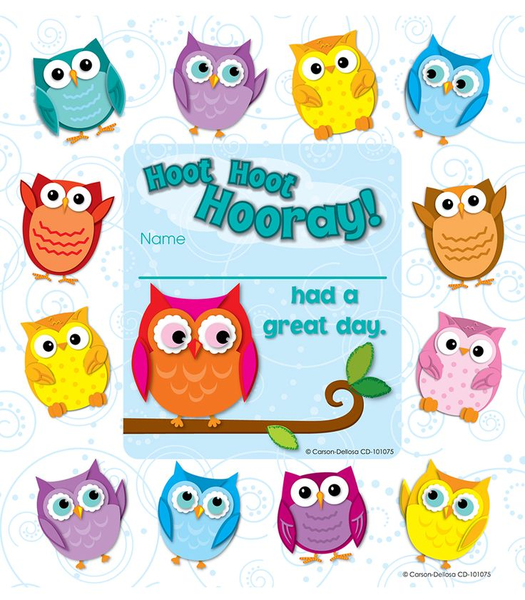 Classroom Decor Owls ~ Best images about theme colorful owls on pinterest