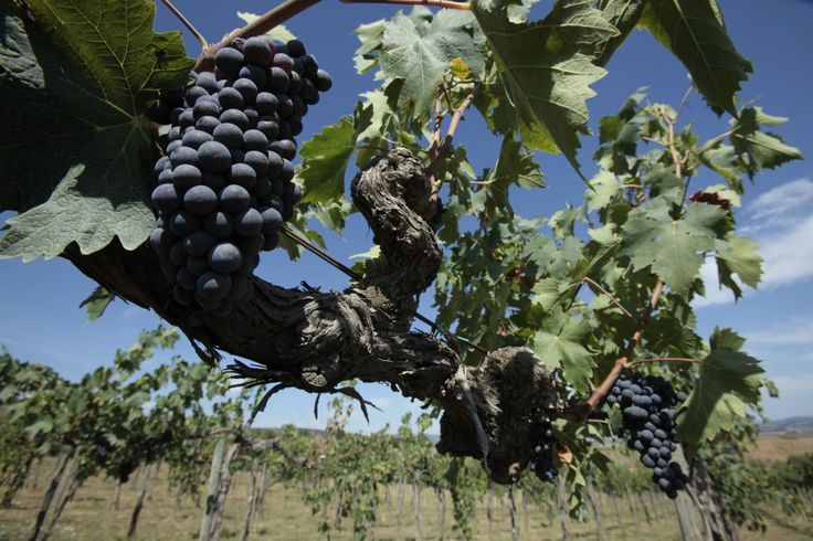 Top 11 Tuscan wine denominations