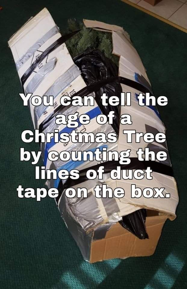 Christmas Tree Box Morning Humor Funny Memes Funny Pictures