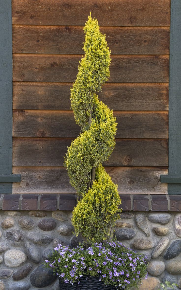 11 best Trees images on Pinterest | Landscaping ideas, Yard ideas ...