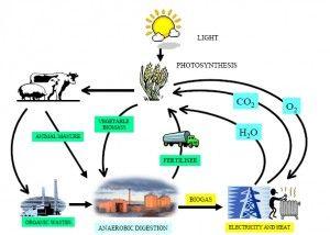 l comparto del biogas rappresenta una formidabile leva di sviluppo per l'intera economia nazionale. L'auspicio è che il nuovo governo, alla ricerca di soluzioni immediate per tirar fuori l'Italia da una recessione disastrosa, sappia guardare alle occasioni più proficue in grado di consolidare il Paese nel ruolo di leadership mondiale della green economy
