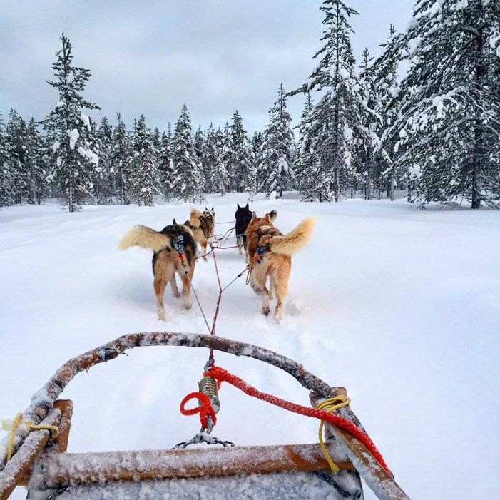 These huskies were photographed by Tiffany and Amanda, the women behind Wine Taste Travel, on their recent trip to Lapland in northern Finland.   www.lab333.com  www.facebook.com/pages/LAB-STYLE/585086788169863  http://www.lab333style.com  https://instagram.com/lab_333  http://lablikes.tumblr.com  www.pinterest.com/labstyle