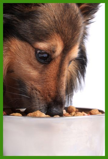 Breaking Your Dog of Destructive Chewing | Dog Training * Check out this  great article.