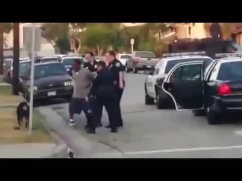 CRUEL Police Shoot a Dog.. Must Watch.. #dog #police #terrorism #porn