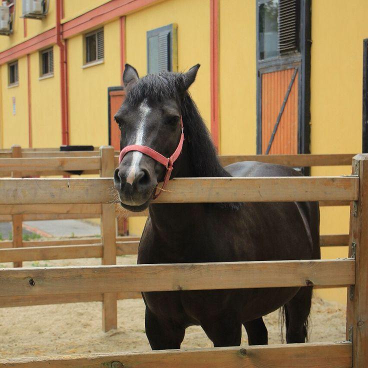 """83 Beğenme, 4 Yorum - Instagram'da 🇹🇷 (@hayatvereniinkulu): """"#horses #horse #horsesofinstagram #horseshow #horseshoe #horses_of_instagram #horsestagram…"""""""