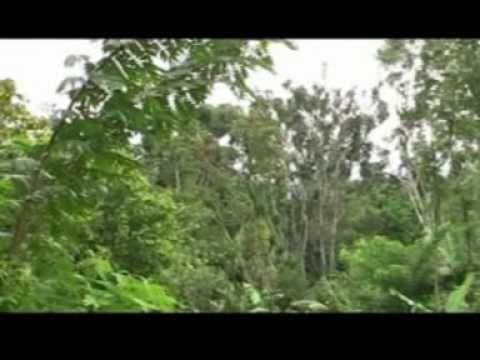 Jaga Lingkungan - Video Lagu Anak Anak Usia Dini + Lirik Terima Kasih telah menonton video kami, Tolong di like,bagikan dan subscribe kami: https://www.youtu...