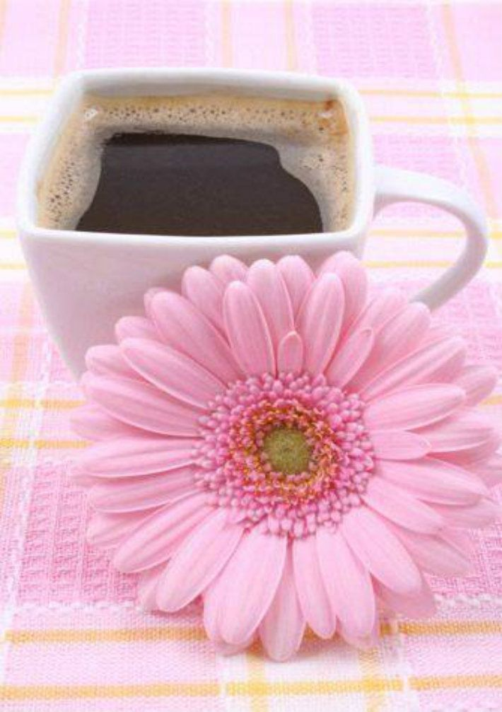 Pin By Vedrana Rog On My Coffe 4 Vedrana Rog Good Morning Coffee Beautiful Pink Flowers Good Morning Analysing site traffic and usage. pinterest