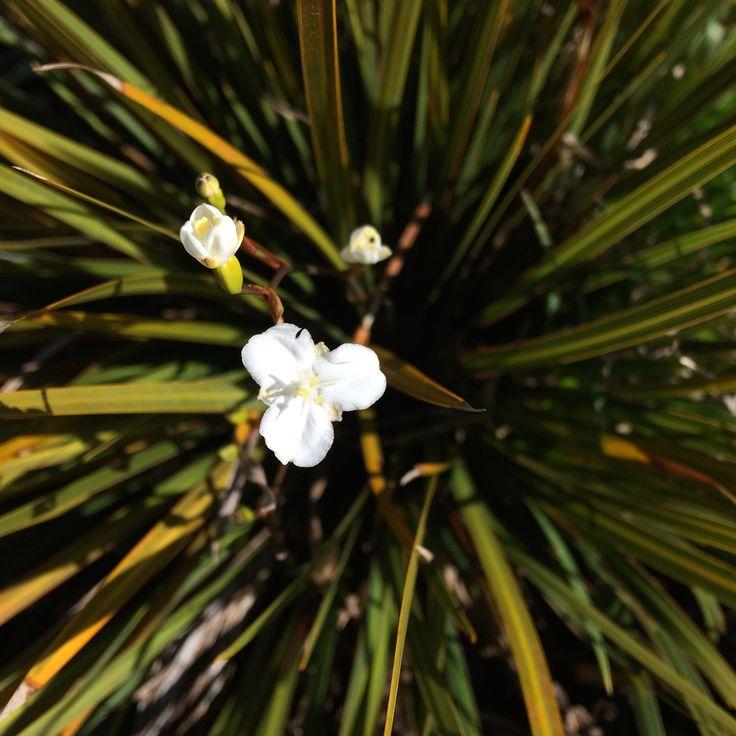 No. 31 Native Iris - The Individuality Essence.
