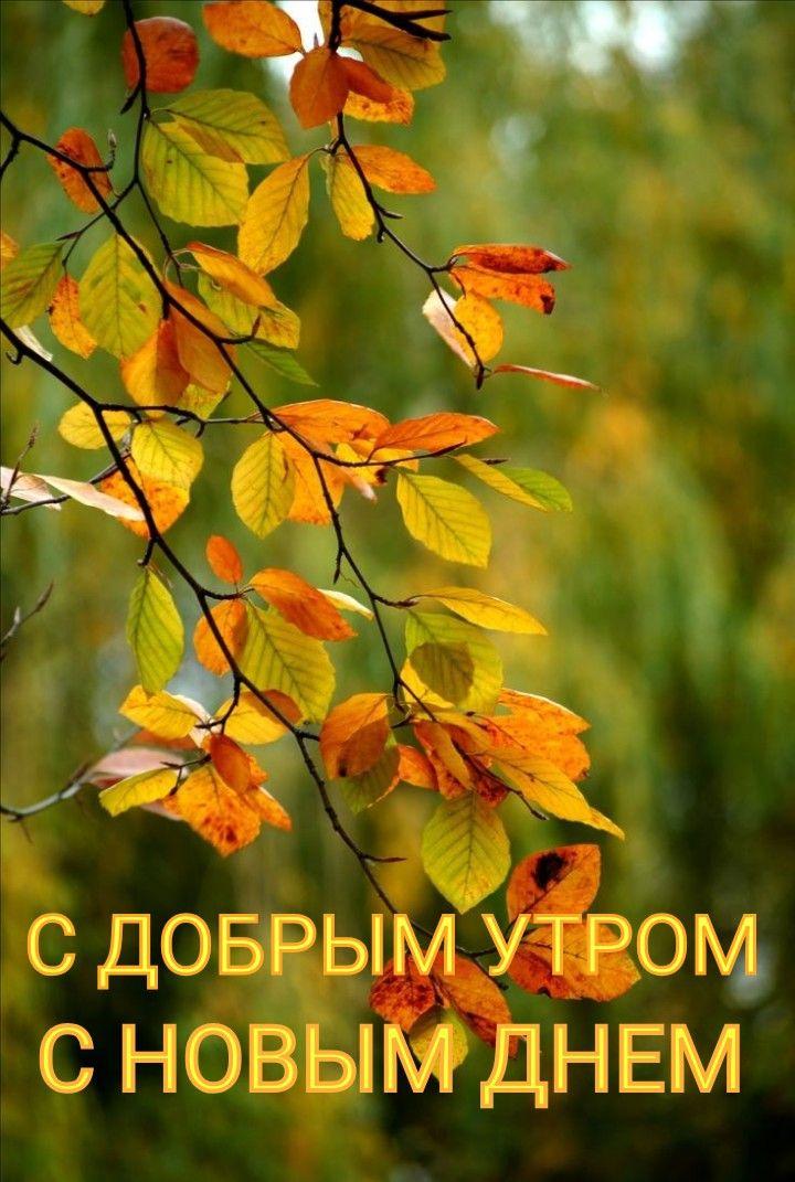 Pin Ot Polzovatelya Lyubov Zhizhkun Na Doske Dobroe Utro Pejzazhi