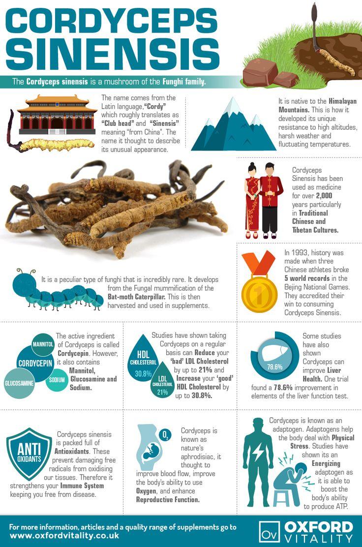 cordyceps herb benefits