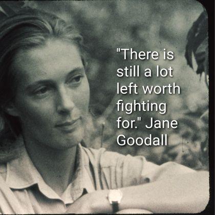 Jane Goodall Quotes Amazing 16 Best Gospel Of Goodall Images On Pinterest  Jane Goodall