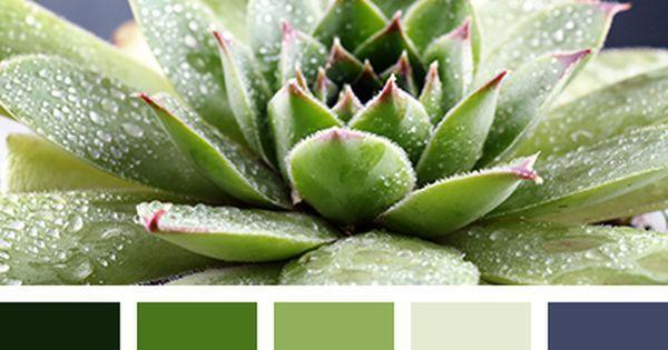 Liked on Pinterest: бледно-зеленый бледно-синий бледно-синий и зеленый болотные оттенки зеленого зеленый зеленый и синий нежный голубой оливковый цвет оттенки зеленого оттенки оливкового цвета оттенки салатового подбор цвета для дизайна подбор цвета для