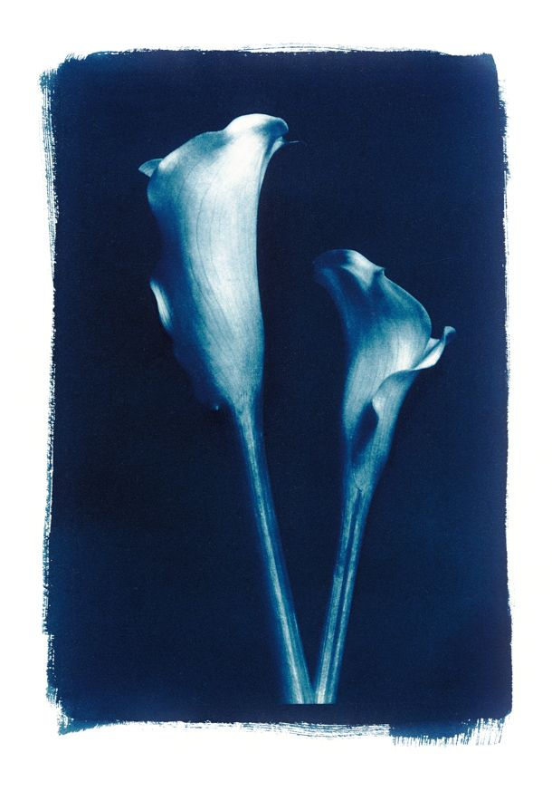 Cyanotype Process: digital photography using traditional techniques