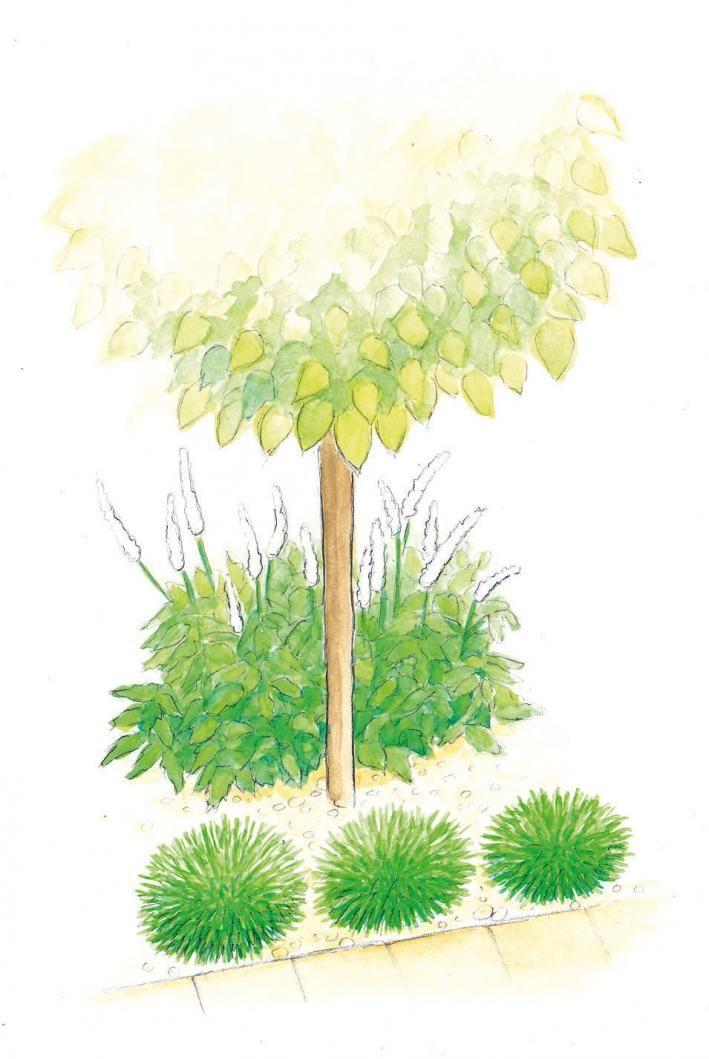 Trompetenbaum mit Silberkerzen