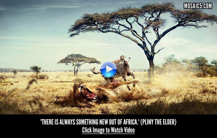 #african #wild