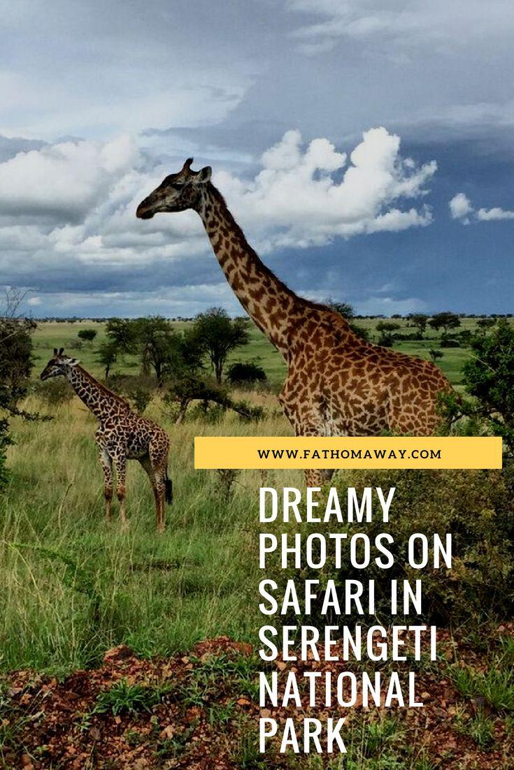 Dreamy Photos On Safari In Serengeti National Park Serengeti National Park Serengeti Safari