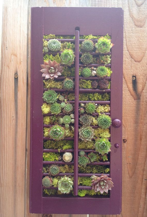 25 Best Ideas About Succulent Frame On Pinterest