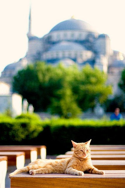 Traditional view with a cat, Istanbul