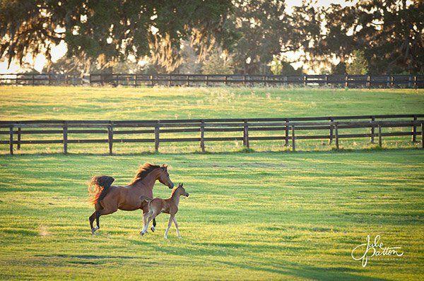 18 حقيقة حول الحمل عالي المخاطر في الأفراس Horses Foals Animals