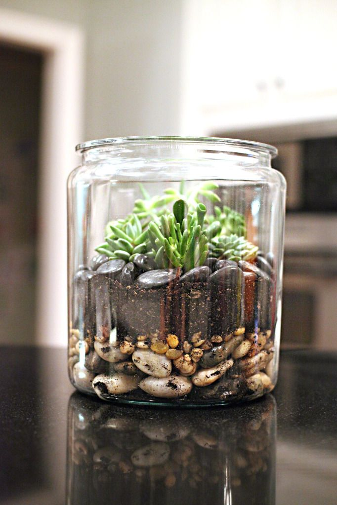 How to make a succulent terrarium. This would look great in my office; it would look great anywhere; and I think it would make a wonderful gift idea, as well.