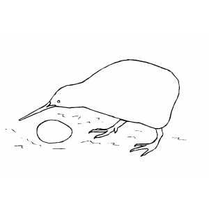 Kiwi bird with egg