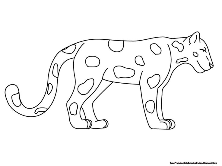 Tropical Rainforest Layers Coloring Page Animal Coloring Pages