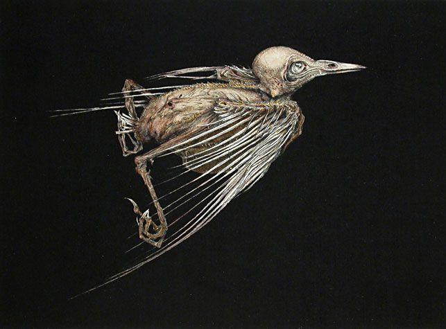 Arne Bendik Sjur. A Bird (black background, side-view), 2003.