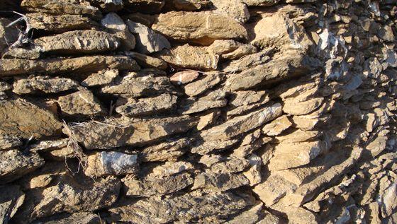 """Muro a seccoQuesta tecnica agricola ha permesso di creare superfici coltivabili dove non esistevano, sorrette da muri a secco in pietra, raccolta in superficie o cavata dalla roccia. I terrrazzamenti sono di valore storico con profondi legami col paesaggio consolidato e con la difesa del suolo. La Cooperativa Olivicola di Arnasco, in collaborazione col gruppo culturale """"Amici dell'Olivo"""","""