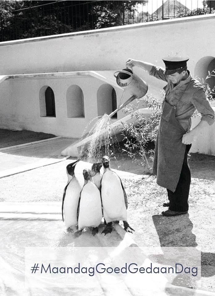 Het leven is als een dierentuin. Je moet alleen wel zelf de pinguïns water geven. #MaandagGoedGedaanDag