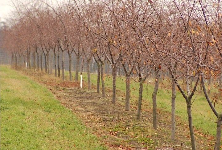 Suttons Bay Farmers Say Fall Rain Benefits Spring Crops - Northern Michigan's News Leader