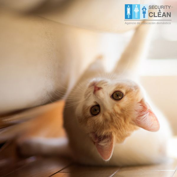 ¡#Mascotas en casa! Una buena idea para proteger tus muebles de los rasguños es envolver las patas de tus sillones o sillas. con alguna tela que combine.
