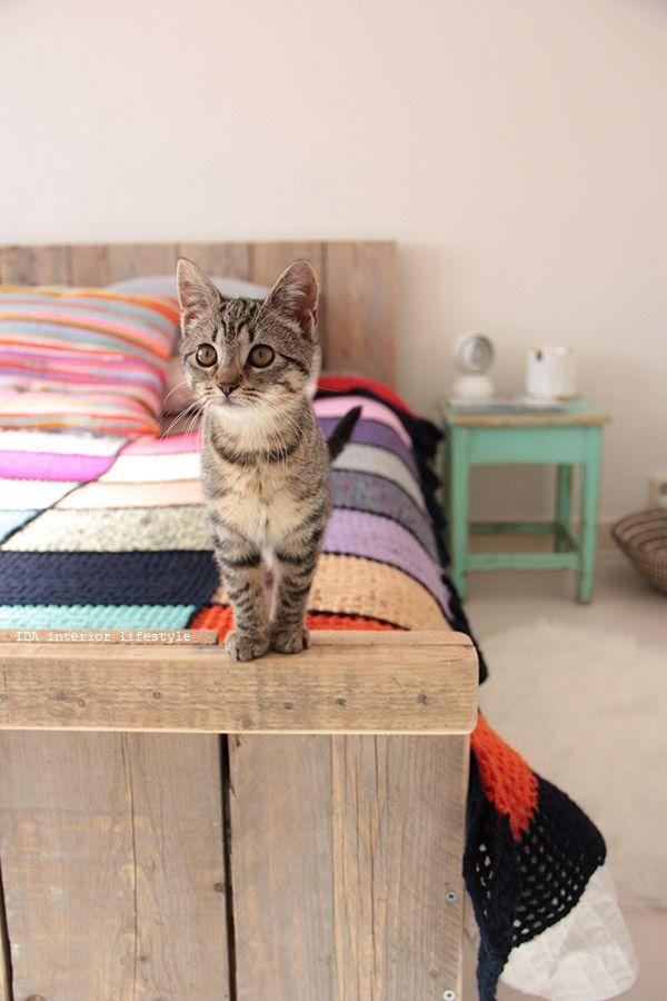 cozy blanket, very cute cat