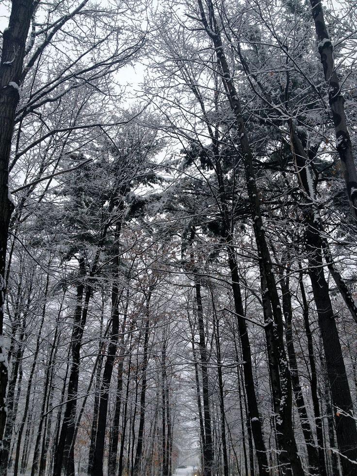 1st snow!