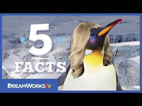 5 Amazing Penguin Facts that are Not from Madagascar | 5 FACTS - YouTube