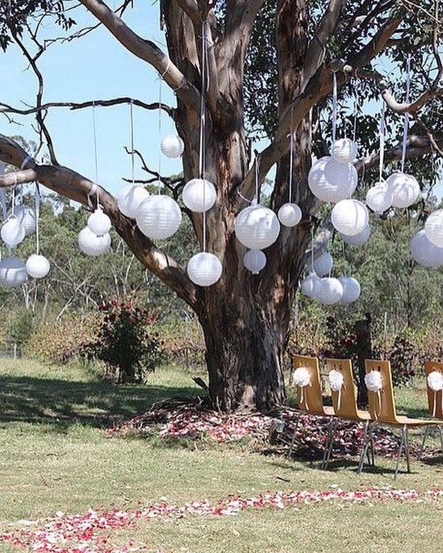 Ook leuk om een boom te versieren met witte lampionnen en linten. #lampion…