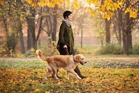 Kutyasétáltatás - PROAKTIVdirekt Életmód magazin és hírek - proaktivdirekt.com