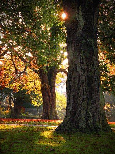 "de-preciated: ""Autumn Trees by Bavid Dailey on Flickr. Source - (http://flic.kr/p/3oRbW8) Darckr Halstead Town Park, October 2007 """
