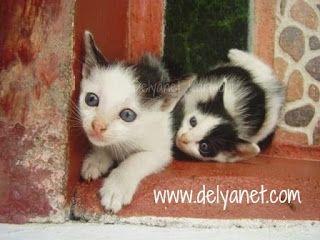 Anak Kucing nan Lucu