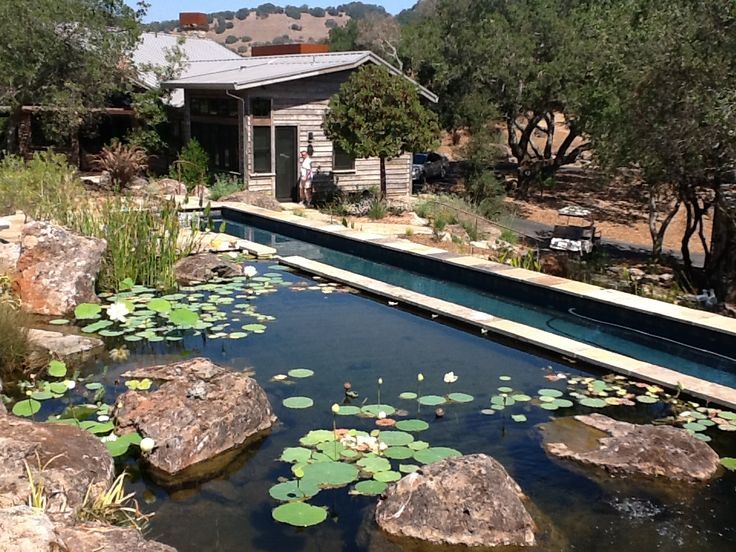 103 best back to the earth images on pinterest natural for Koi pond natural swimming pool