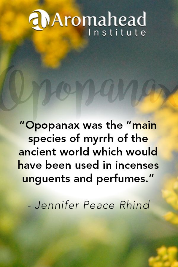 Opopanax (Commiphora guidotti) essential oil is emotionally grounding!