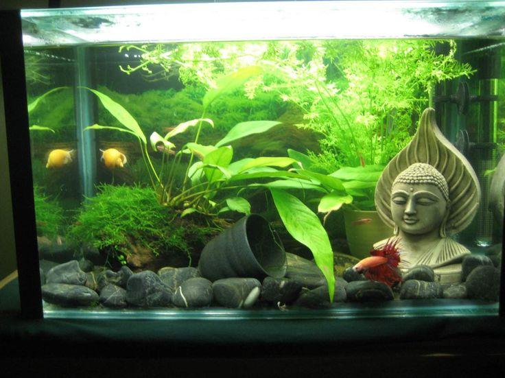 Best 25 fish tank themes ideas on pinterest aquarium for Bubbles in betta fish tank
