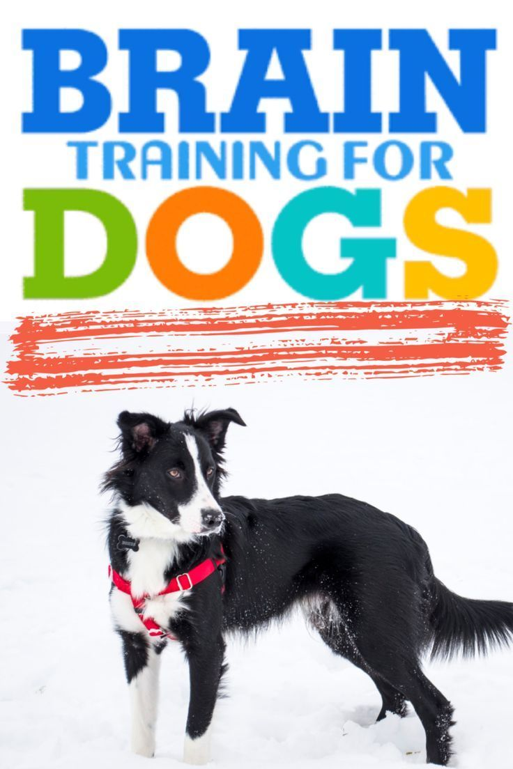 Revealed By One Of America S Top Professional Dog Trainers A
