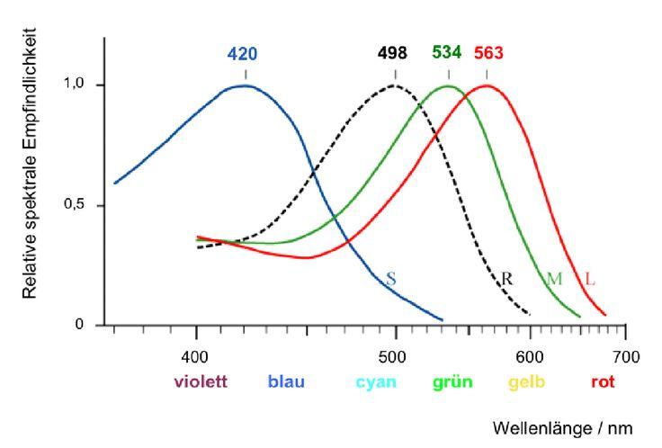 Empfindlichkeit der drei Zapfentypen unseres Auges (S-, M- und L-Zapfen) sowie der Stäbchen (R). S=kurze Wellenlängen, M=mittlere Wellenlängen, L=lange Wellenlängen