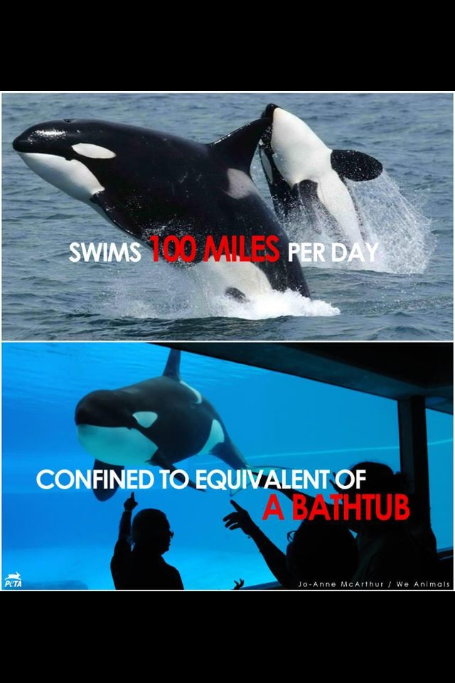 28 best images about Whales. on Pinterest | Seaworld orlando, Cove ...
