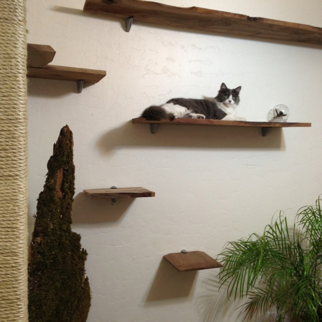8 Best Cat Walls Amp Windows Images On Pinterest Cat Stuff