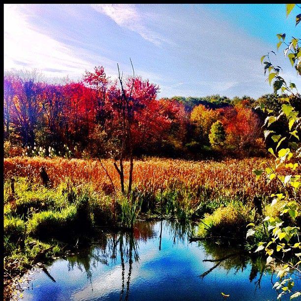 Broad Meadow Brook Wildlife Sanctuary in Worcester, MA