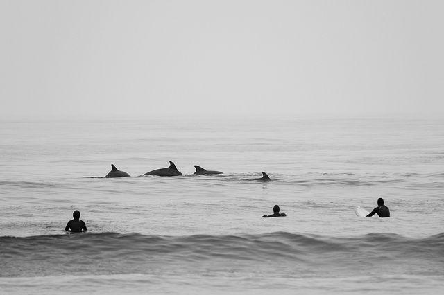 The Waves : Fotografia