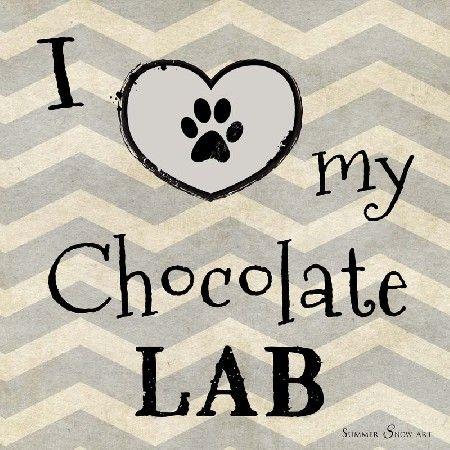 I Love My Chocolate Lab Dog by Summer Snow