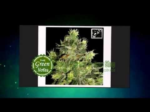 Semillas    Semillas de Cannabis Baratas  http://www.thegreennotes.es/semillas/  Semillas de Cánnabis Feminizadas, autoflorecientes, medicinales, The Green Notes selecciona para usted semillas de   cánnabis de primera calidad de los bancos más importantes