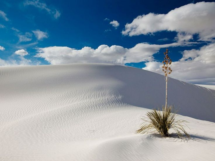 White Sands National Monument  Alamogordo, New Mexico
